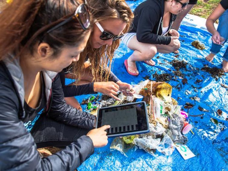 People crouch over blue tarp topped with litter and use tablet device to count.