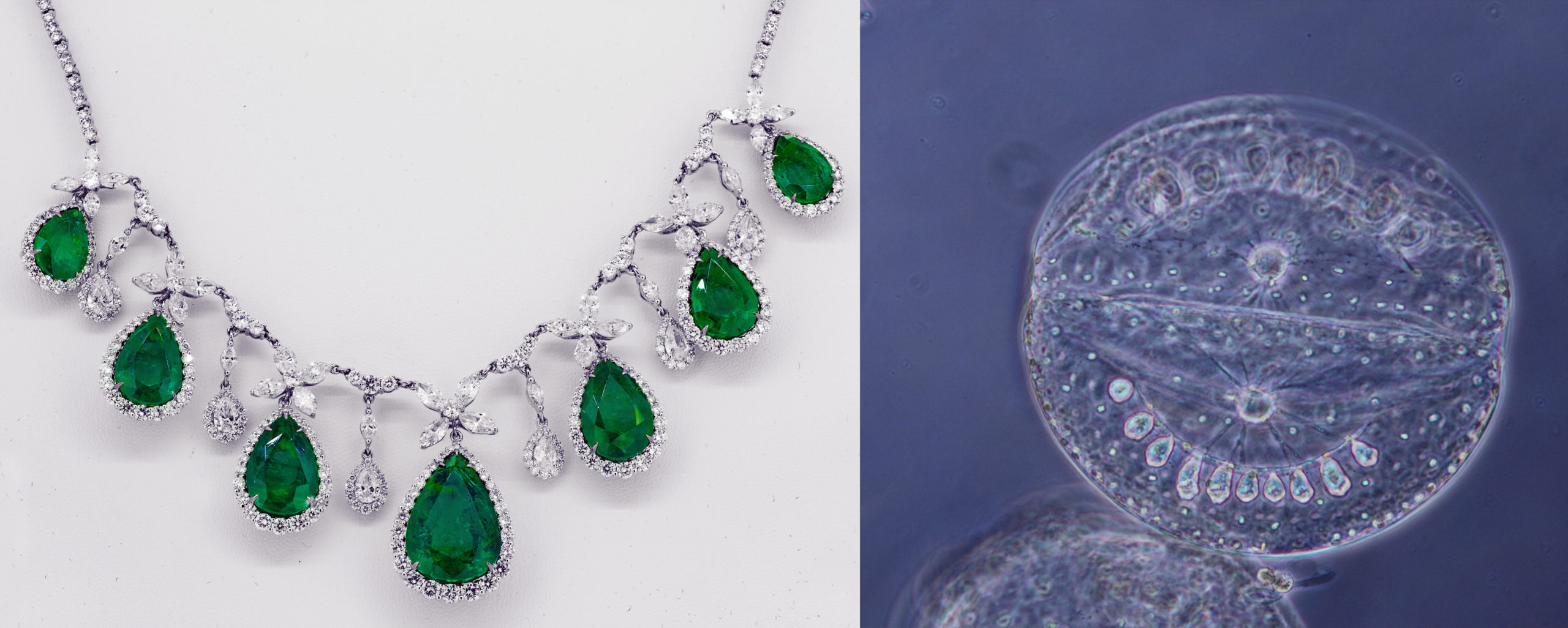 A silver and green necklace next to a microscopic image of a white organism.