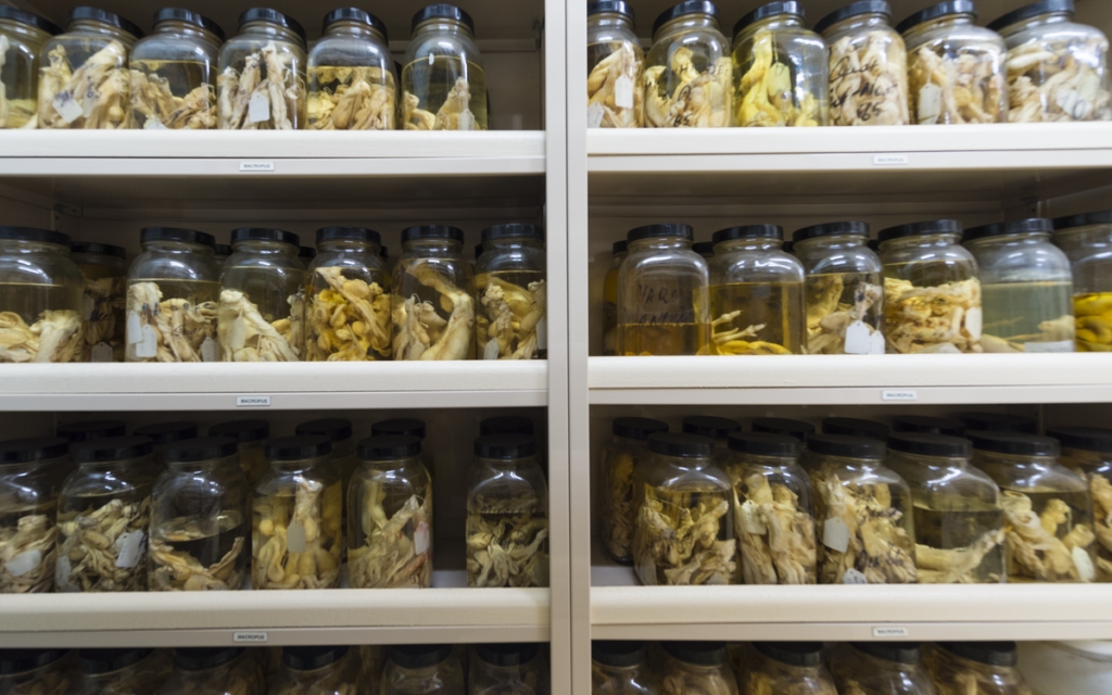 A large shelf containing many different specimen jars.