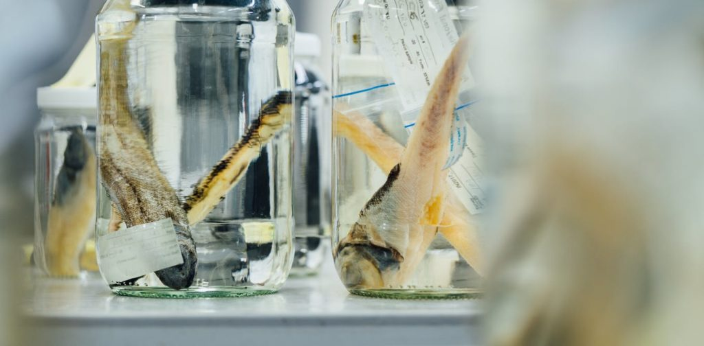 Specimens in a jar on a table.