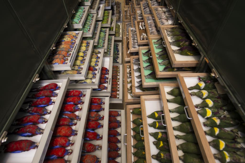 Rows of bird specimens stored in shelves.