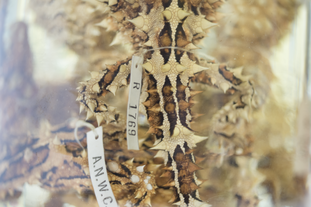 A close up photo of a specimen jar containing thorned species.