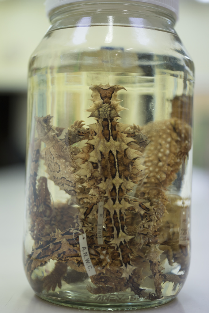 A jar containing many different preserved specimens.